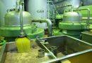La producción de aceite de oliva en Andalucía alcanzará las 1,3 millones de toneladas, un 40% más