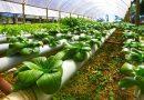 Agritech, o cómo Irlanda, con solo cinco millones de habitantes, produce anualmente alimentos para 35