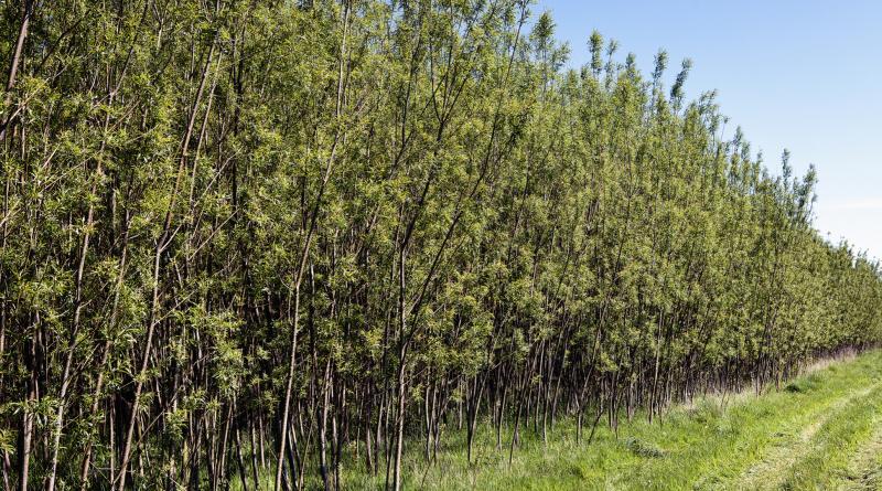 Un nuevo flujo de efectivo para agricultores de la mano de Iggesund