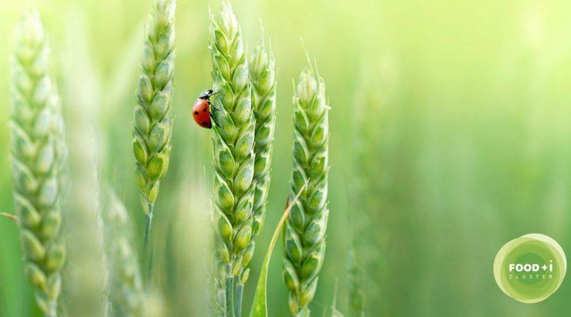 FOOD+i se posiciona como el único clúster alimentario español de referencia en el campo de la Bioeconomía