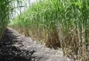 Presentan agenda para fortalecer a la agroindustria de la caña de azúcar en México