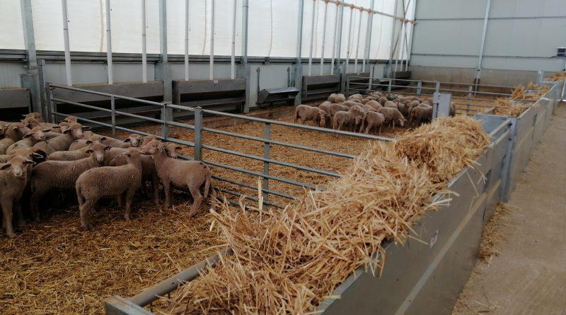 CAAE emite el primer certificado al centro de tipificación de ovino ecológico de CorSevilla