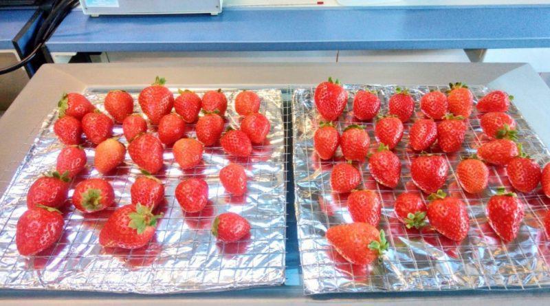 Conservación de frutos con un gel de pectinas de bajo índice glucémico